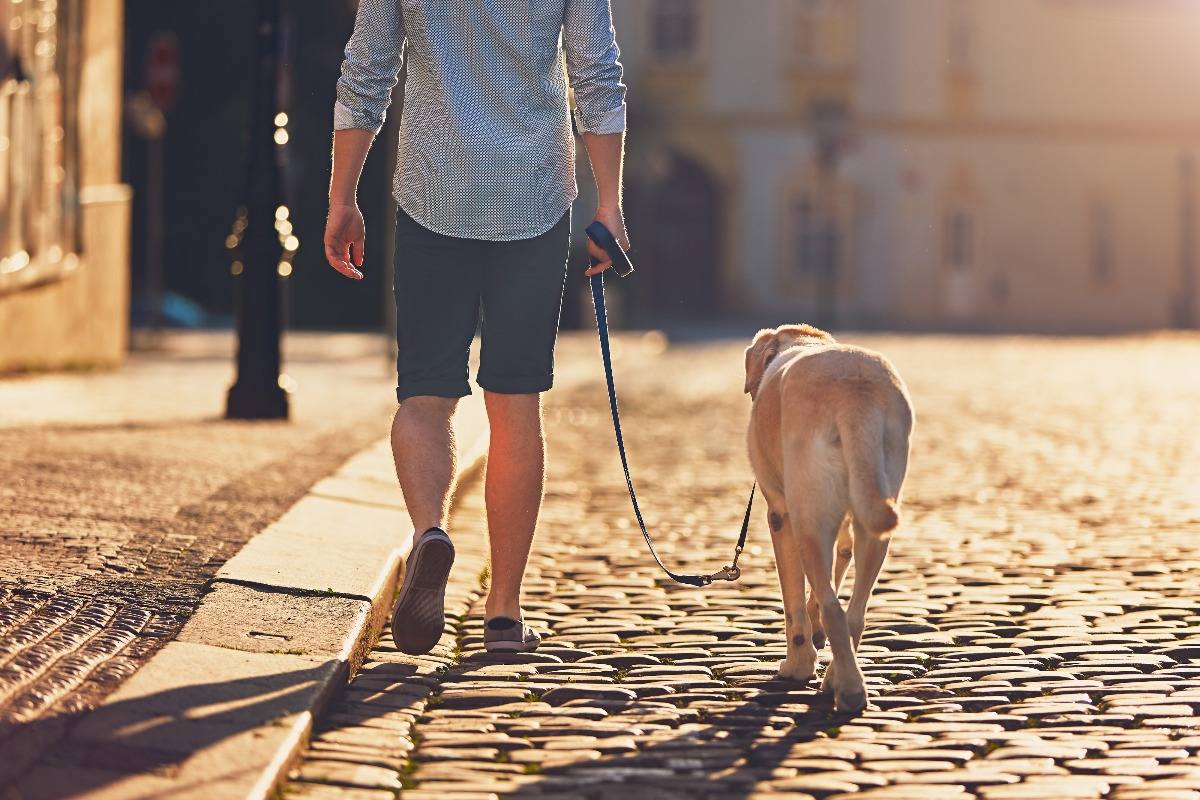 A dog walker is walking with a labrador in a quiet place in evening with warm sunshine