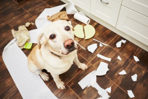 A dog without proper training could be a big trouble to your life.