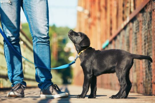You will learn how to guide your dog to behave desirably in this dog obedience training course.