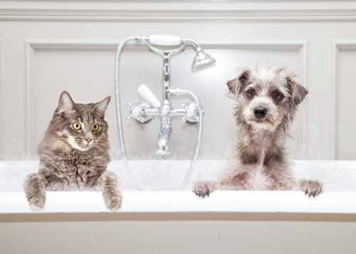 Pet Grooming Service From Pet Sitting Diary
