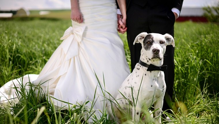 Wedding Pet Care Service